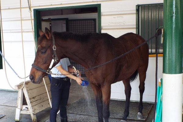 equine museum and pony center