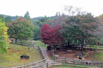 Yamazoe-mura in Nara