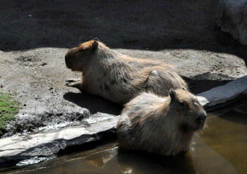 Asahiyama Zoo, Asahikawa - Hokkaido - Asahiyama Zoo, Asahikawa - Hokkaido - J...