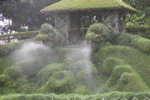 Ces dragons végétaux crachent de la brume sur les visiteurs !