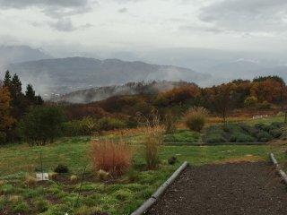 Садовая тропинка заканчивается там, где начинается виноградник.