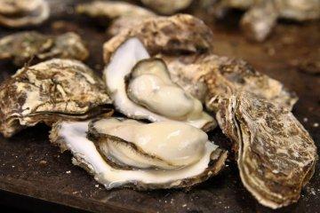 Matsushima Oyster & Sake Festival 2016