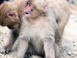 แม้ว่าจะดูน่ารักและเล่นกันสนุกสนาน แต่โปรดรำลึกไว้ว่าสัตว์พวกนี้เป็นสัตว์ป่า ไม่ควรไปจับหรือเข้าใกล้จนเกินไป