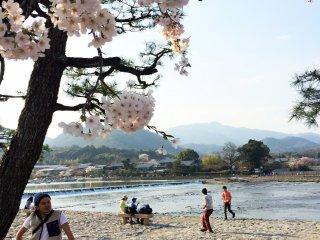Arashiyama est un endroit populaire pour les cerisiers en fleurs