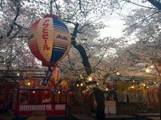 Appréciez une bière et la vue sur les sakura