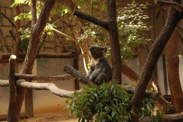 Le Zoo de Higashiyama à Nagoya