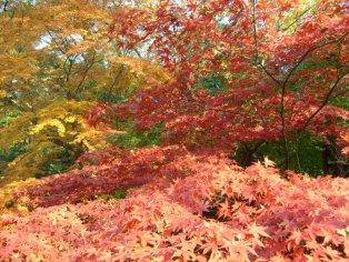Autumn in Ueno Park