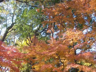 Красное, золотое и зеленое: круговорот цветов в парке