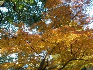 Каждое дерево имеет свои собственные смеси цветов