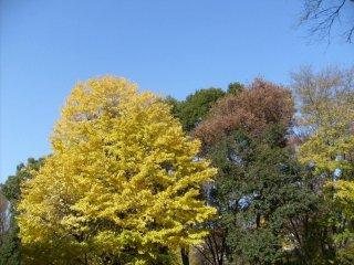 Три моих любимых цвета: зеленый, желтый и синий