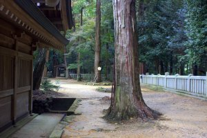 The wood of the shrine and the wood of the trees were both very earthy and beautiful