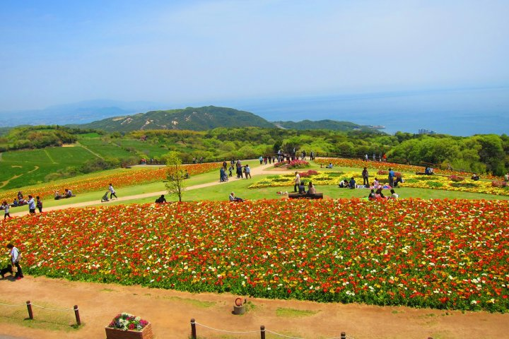 Discovering Awajishima