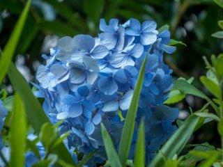 Estas hermosas flores se ven mejor de cerca