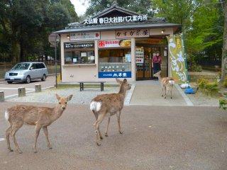 Một tiệm Cafe ở ngã tư Nara