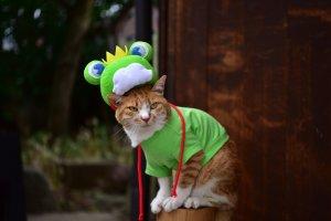La star du festival : le chat-grenouille