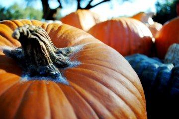 Pumpkin Pudding at 7-Eleven