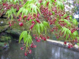 약해보이는 나뭇잎