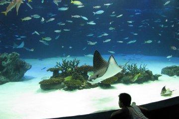 Para Pengunjung di Akuarium Osaka Kaiyukan