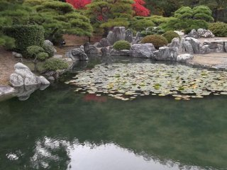 The lily pond in the north garden