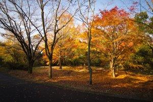 Autumn season gave me lots of beautiful scenery to take photos of
