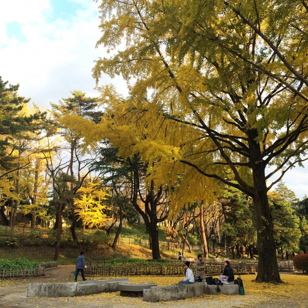 Ginkgo trees grace the scene.