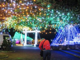 A forest of lights