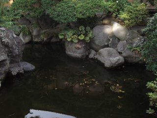Still, tranquil water in the pond