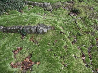 Ancient moss on the steps