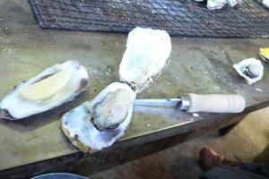 Oysters at Kamakura