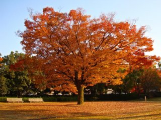 Himeji Garden, Autumn colors