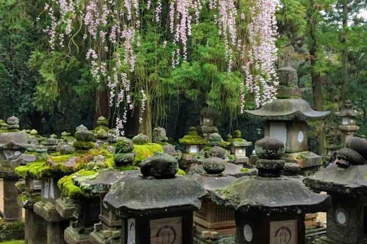 Kasuga Taisha Shrine in Spring