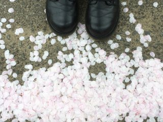 Look down! The petals fly from the tree and gather on the ground like snow