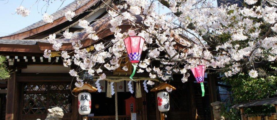 神戸、北野の桜