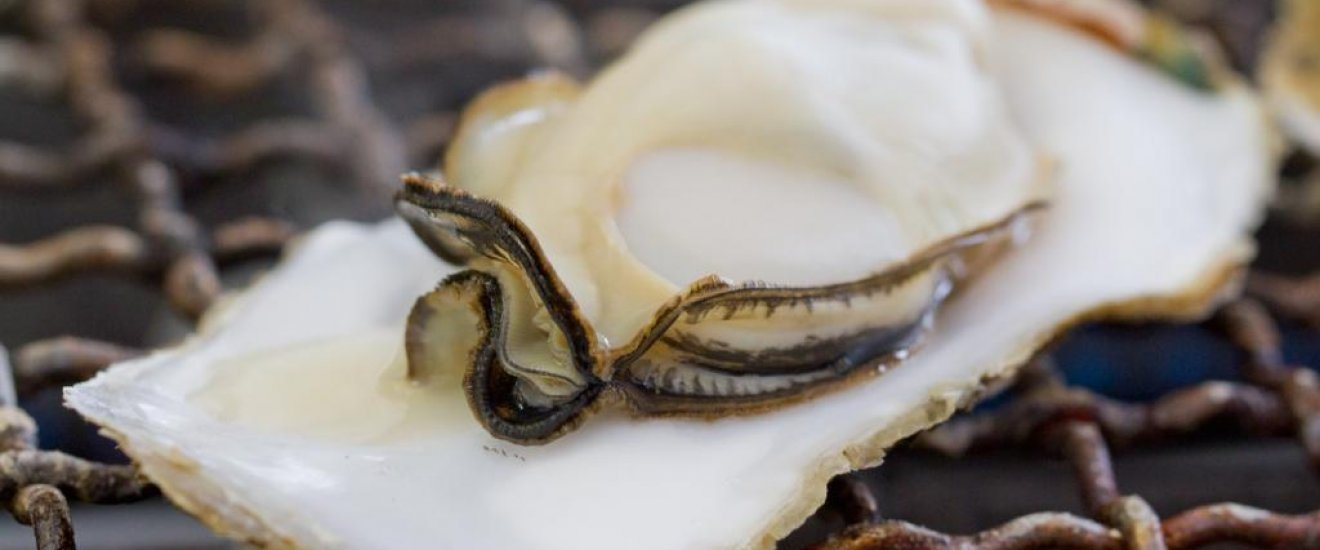 A perfect oyster
