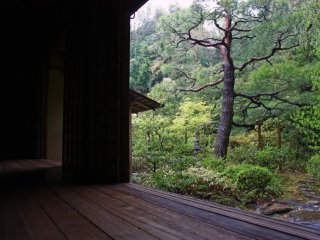 On a rainy day, Kyoto's gardens are beautiful - and quiet!