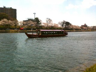 4월 중순 내내 야하기 강줄기에는 벚꽃 구경을 시켜줄 배들이 지나다닌다.