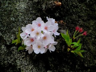 A small cluster of blossoms