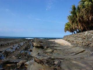 Aoshima est une île subtropicale bordée de palmier. Les jours de beau temps, c'est un endroit idyllique à visiter