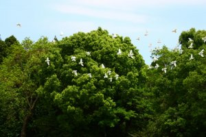 The whole atmosphere of the park is peaceful - right down to the flocks of doves circling the trees!