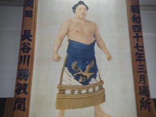 Sumo Portrait