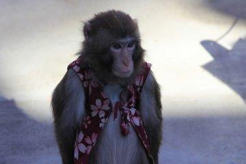 【东京吃喝玩乐】东京—耍猴