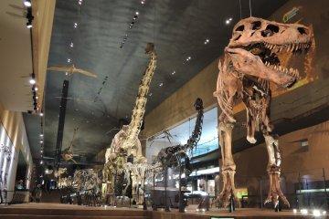 พิพิธภัณฑ์สัตว์โลกล้านปีคิตะคิวชู