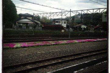 치치부의 히츠지야마 공원