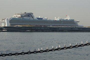 Yokohama Osanbashi Port Guide