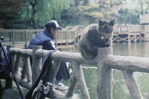 Local fishing at the pond, cats and all.
