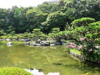 The garden in summer