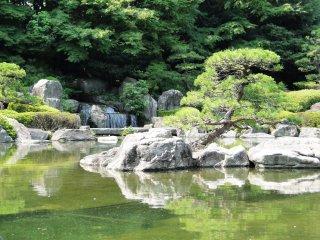 A carefully sculpted tree on the pond's edge