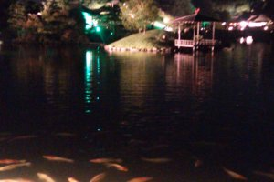 The Koi pond lit up with Okayama castle in the background