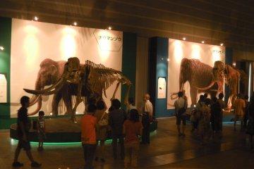 Woolly Mammoth Museum in Yokohama
