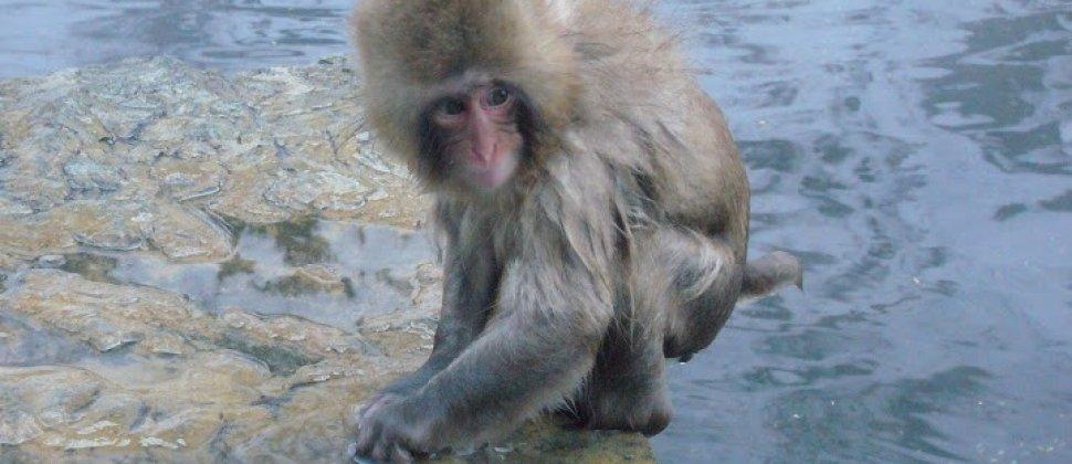 Monkey Park - Jigokudani